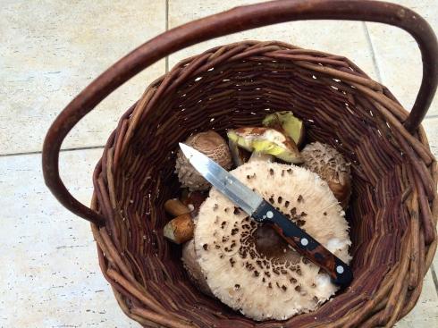 mushroom spoils