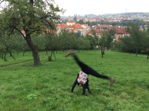 Just doin' a cartwheel, you know you know.