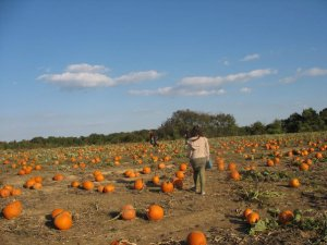 "Pumpkin ""wandering"""